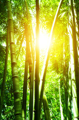 Door stickers Bamboo Asian bamboo forest and sun flare