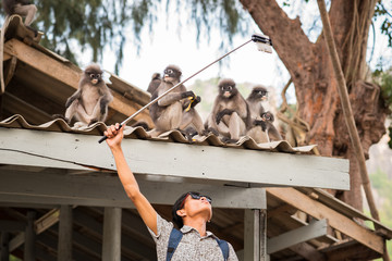 Selfie with monkeys. Young Asian man uses a smartphone fixed on a selfie stick to take a photo with cute funny dusky leaf monkeys that sit on the roof. Travel selfie with wildlife in Thailand