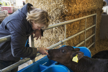 Woman standing in a stable, touching the nose and mouth of a black calf.