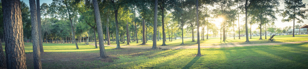 Panorama view an urban park in Texas, America with green grass lawn, huge pine trees and walking/running trail during sunset. Composition of nature in panoramic. Park parking lot is in the distance.
