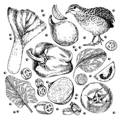 Vector hand drawn set of farm vegetables. Isolated leek, quail, bell peppr, spinach, tomato, onion, jalapeno. Engraved art. Organic sketched object.