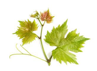 Grape vine leaf isolated white background Fototapete