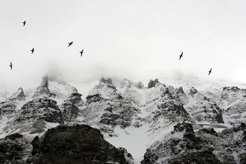 Birds Flying past Arctic Mountains Covered in Mist. Spitsbergen, Svalbard, Norway