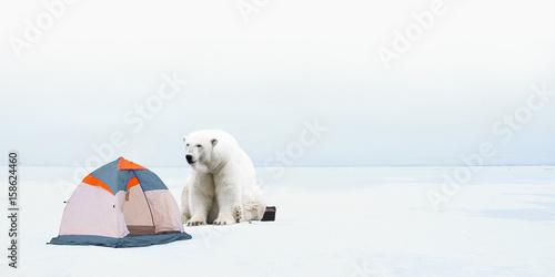 Polar bear is a tourist tent.  sc 1 st  Fotolia & Polar bear is a tourist tent.
