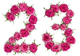 Arabic numeral 23, twenty three, from red flowers of rose, isolated on white background