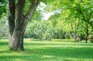 trees in the park with green grass and sunlight, fresh green nature background.