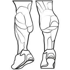 Vector image lower legs. leg muscles.