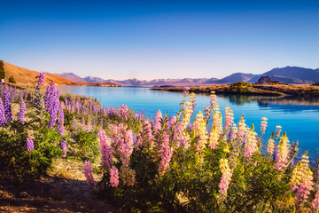 Landscape view of Lake Tekapo and flowers in dreamy style