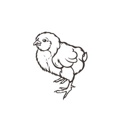 Chick. Poultry. Farming. Livestock raising. Hand drawn. Vector illustration.
