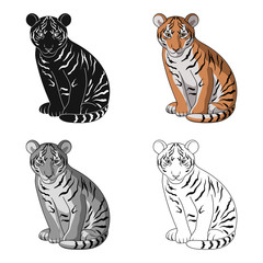 Young tiger.Animals single icon in cartoon style vector symbol stock illustration web.