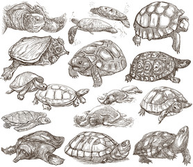 Turtles - collection of hand drawings, freehand sketches on white.
