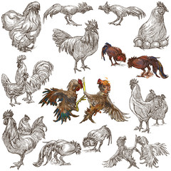 Poultry - An hand drawn full sized pack. Freehand sketching on white background.