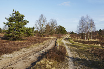 Schneverdingen - Weg in einer Heidelandschaft