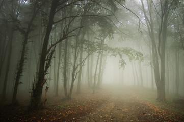 forest road in fog, fantasy landscape Fototapete