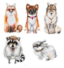 Watercolor fur wild animals