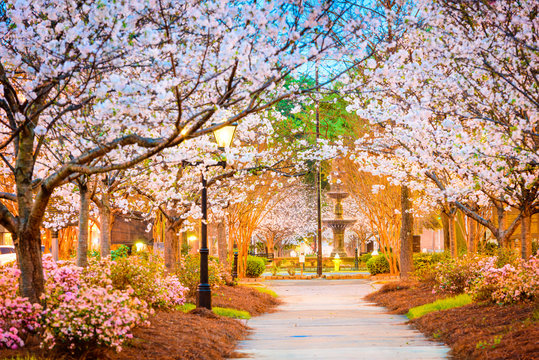 Macon, Georgia, USA during cherry blossom season.