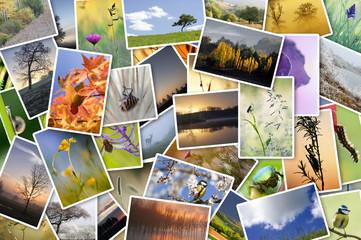 pêle-mêle de photos sur la nature