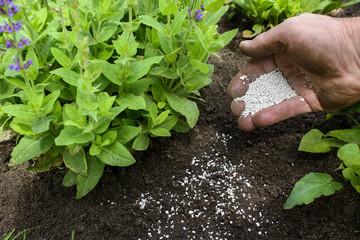 Dünger für den Garten - Gartenkalk