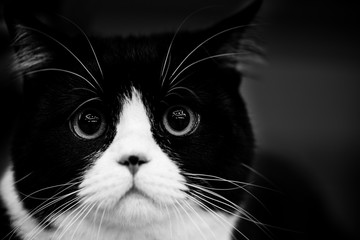 cute cat - black and white animals portraits