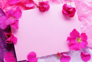 Pink roses on a pink paper background and a pink blank for text