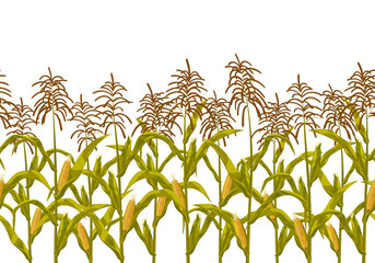 Corn maize vector seamless horizontal border pattern. Realistic botanical isolated illustration.