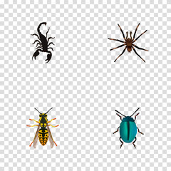 Realistic Arachnid, Poisonous, Bug And Other Vector Elements. Set Of  Realistic Symbols Also Includes Arachnid, Spider, Poisonous Objects.