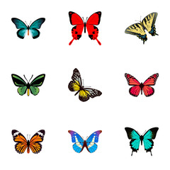 Realistic Tropical Moth, Sangaris, Summer Insect And Other Vector Elements. Set Of Moth Realistic Symbols Also Includes Beauty, Pink, Peacock Objects.