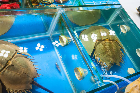 horseshoe crabs in market in Guangzhou city