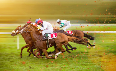 Race horses with jockeys on the home straight Fototapete