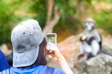 Tourist taking photo  monkey by smartphone at the park.