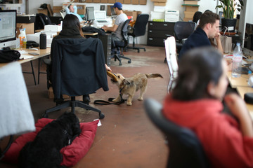 Dogs are seen at the Lumi office in Los Angeles