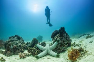 Full Length View Of Scuba Diver Underwater