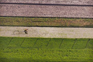 Indonesia Rice field