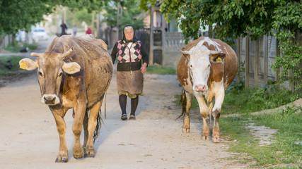 Rural life, Toceni, Craiova, Romania