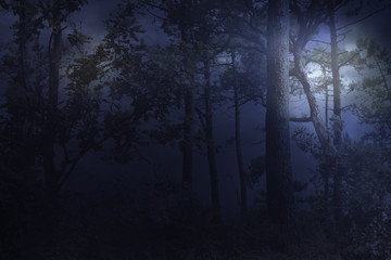 Wall Murals Forest Full moon rises over a forest on a misty night