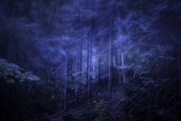 Foggy woods at dusk
