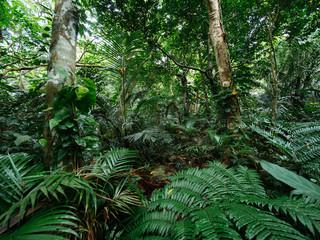 石垣島のジャングル