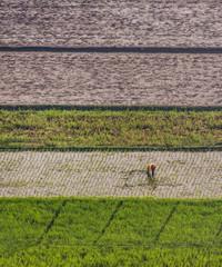 Field Line Pattern