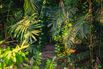 Jungles. Path goes inside of the dark tropical forest with lianas and palm trees around