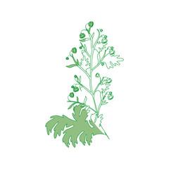 Beautiful ornamental flowers icon vector illustration graphic design