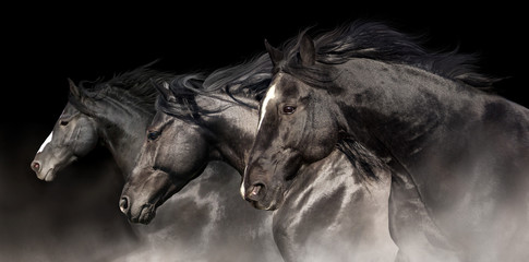 Black stallions with long mane run on dark background