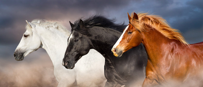 Horse herd portrait run fast against dark sky in dust