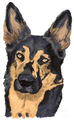 gemaltes Portrait eines Deutschen Schäferhund