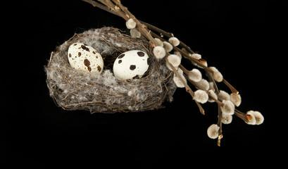 quail eggs in the nest