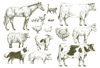 Group of animals vector drawing