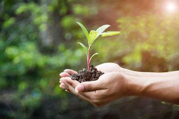 hand holding plant with bokeh and nature background, save the world and World Environment Day concept at sunny day