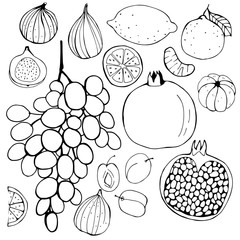 .Hand-drawn fruits.  Figs, grapes, pomegranate, plum, lemon, Mandarin.  Vector illustration.  .