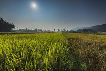 Beauty farmland