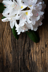 White rhododendron on wood - wooden table