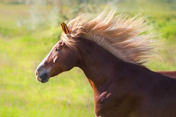 Red horse with long blond mane silhouette